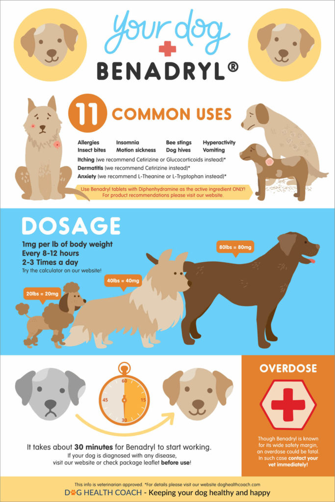5 Things Dog Owners Should Know About Giving Benadryl To Dogs
