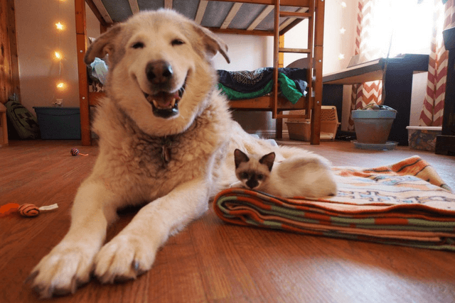 After Her Feline Best Friend Passed Away, This Big Dog Was Saved By Pint-Sized Fosters