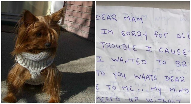 Dog S Ashes Are Stolen Then Returned Weeks Later With A Heartfelt Note