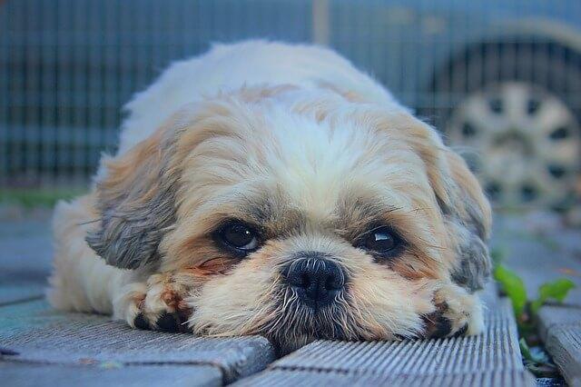Las 7 razones reales por las que su perro Mantiene Licking-2690