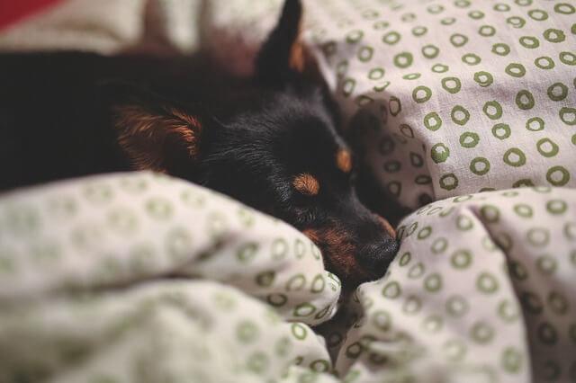 my dog won t sleep
