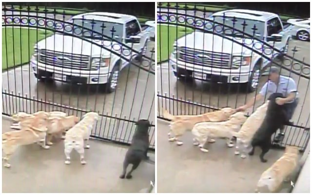 Dog Owner Is Shocked When He Catches The Mailman's Routine On Camera