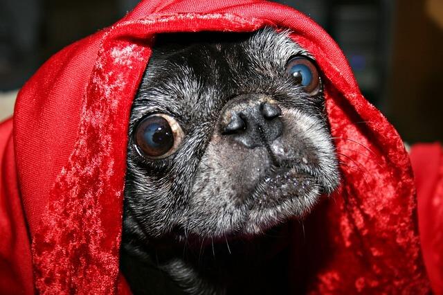 Las 7 razones reales por las que su perro Mantiene Licking-8577