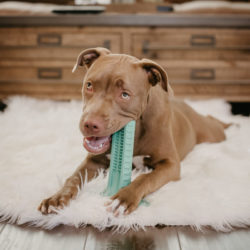 Brite Bite Brushing Stick: The Revolutionary Way to Clean Your Dog's Teeth They'll Actually Love!