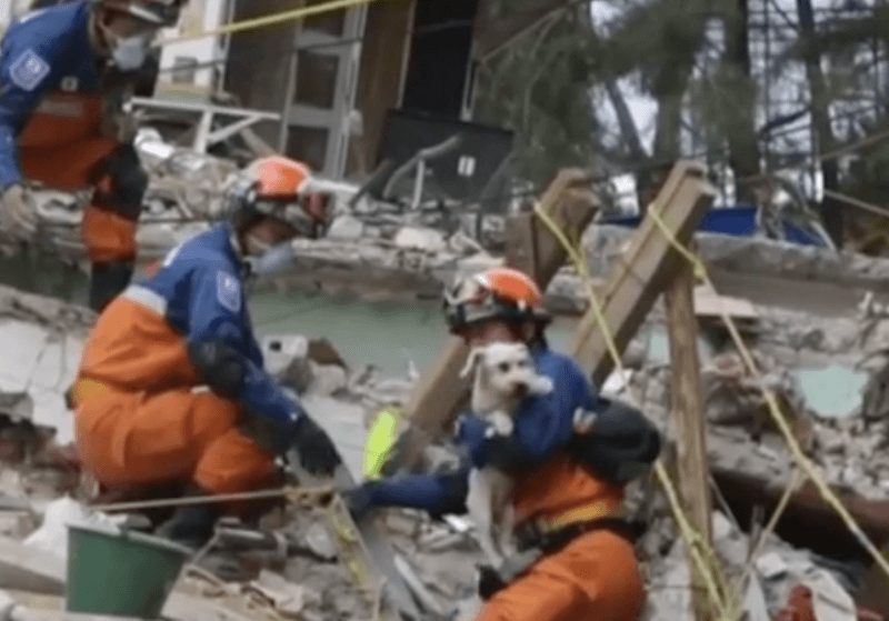 Dog Saved From Rubble Six Days After Earthquake In Mexico