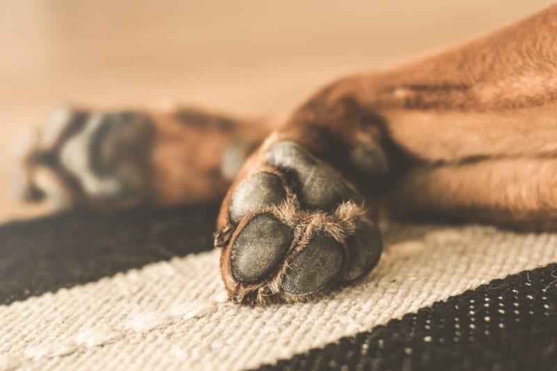 prevent canine arthritis