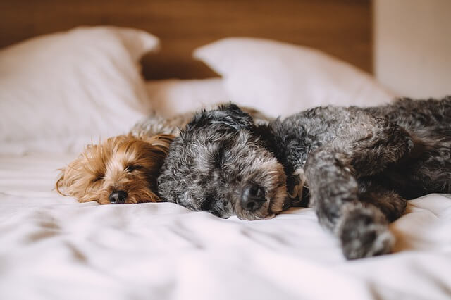 5 Reasons Sharing Your Bed With Your Dog Is Awesome PET-icure Pet Grooming & Supplies Pepperell Massachusetts 01463 Pet Store Dog Cat Grooming Treats Toys Food