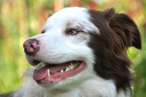 The Greatest Canine Dental Hygiene Hack Your Pup Will Love