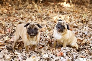 Tips on how to Cope with Your Canine's Autumn Allergic reactions