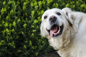 How To Forestall And Deal with Dental Illness In Canines