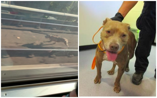 Dog Who Delayed Trains In Bay Area Now Up For Adoption