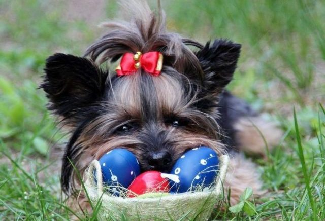 Best Food For Dogs With Stress Colitis