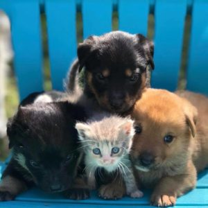 Maternal Rescue Canine Welcomes Kitten Into Her Litter Of Foster Puppies