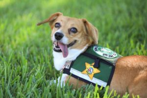 Sheriff's Workplace Hires Lovable Remedy Canine To Consolation Crime Victims