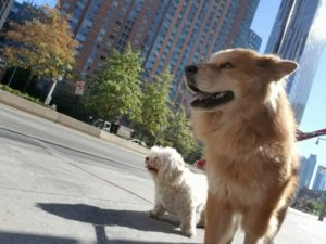 Runaway Canine Spends The Day Touring NYC Earlier than Being Reunited With Proprietor