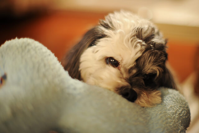 7 Reasons Dogs Behave Aggressively Toward Other Dogs