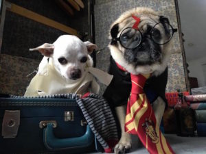 "Senior Rescue Canines Gown As ""Harry Potter"" Characters For Halloween"