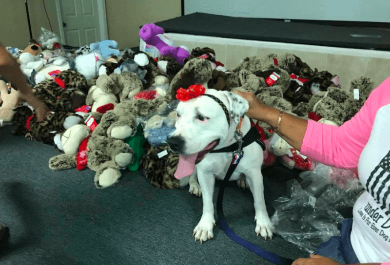 Former Bait Dog Does Something Special For Kids Affected By Hurricane Irma