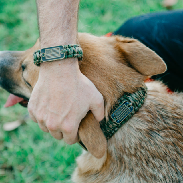 Choose the Best Collar For Your Dog