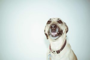 Your Canine's Facial Expressions Would possibly Not Imply What You Assume They Do