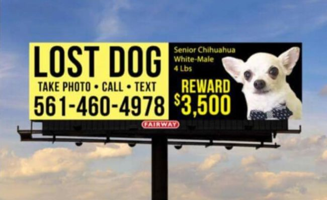 Hurricane Irma Evacuee Attempts To Locate Missing Dog With Billboards