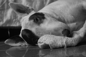 What Is Kidney Most cancers In Canine?