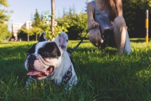 10 Canine Breeds That Are Social Butterflies