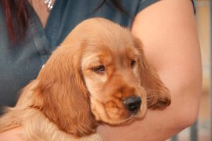 What Is Staph An infection In Canine?