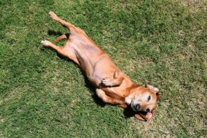 Suggestions For Serving to Canine With Delicate Stomachs