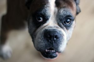 How A lot Omega-Three Ought to I Give My Canine? The Shocking Reply