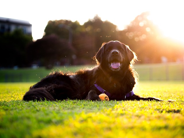 Allergies In Dogs: How Benadryl Or This Natural Alternative