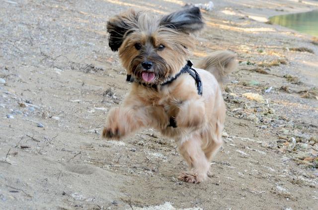luxating patella dog brace chihuahua