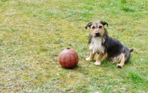 What To Do For Canines With Luxating Patella