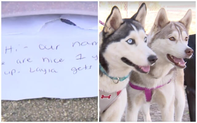 Huskies Found Abandoned In Dog Park With Note Are Looking For Their Forever Homes