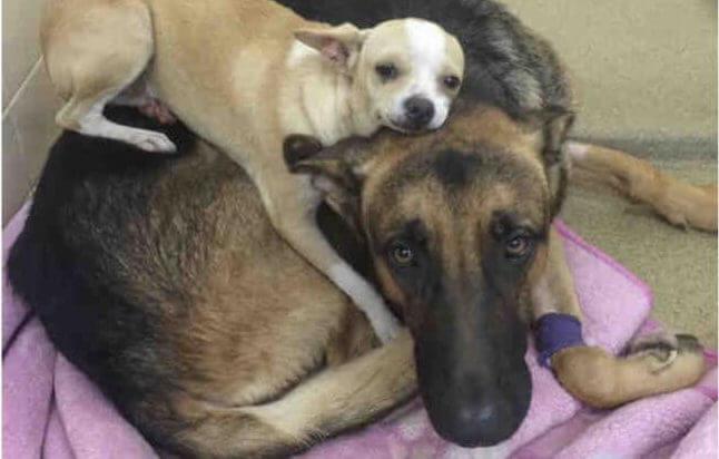 These Deeply Bonded Best Buddies Need A Hero To Adopt Them Both