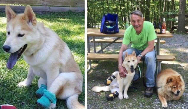Man Drives 2,800 Miles To Adopt A Disabled Puppy Mill Survivor