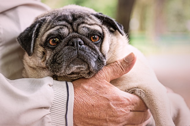Why The Death of a Pet Can Be Even More Painful Than The Death Of A