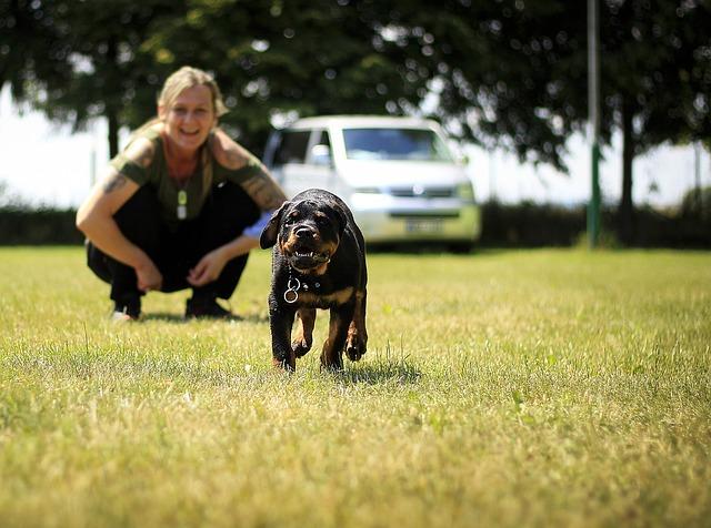 free dog training course