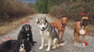 three Canines Assist Injured Canine Walker Survive 2 Days In The Wilderness