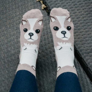Light Brown Chihuahua Print Socks