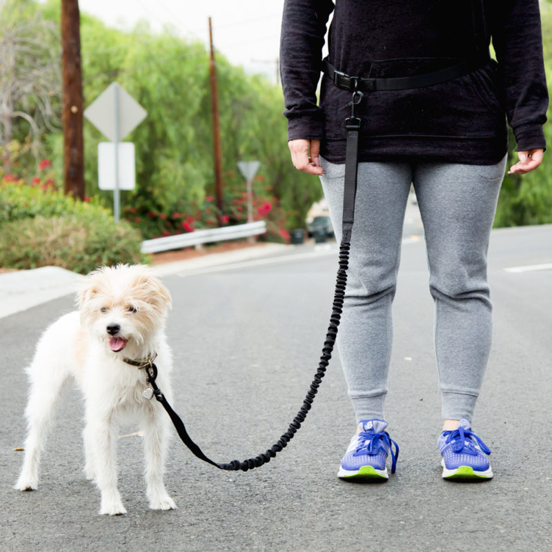 small dog going for walk
