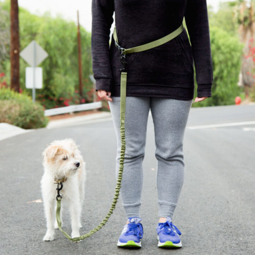Hands Free Army Green Bungee Dog Leash with Waist Belt