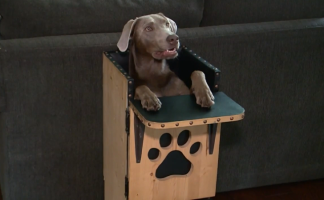 Dog With Genetic Condition Eats Her Meals In A Special High Chair