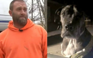 Household of 5 Credit Their 150-Pound Canine For Stopping Dwelling Invasion
