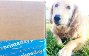 New In-House Amazon Supply Choice Poses Issues For Canine Homeowners