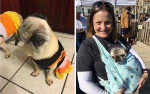 Trainer Provides Blind Rescue Canine To Her Pack Of Particular Wants Pugs