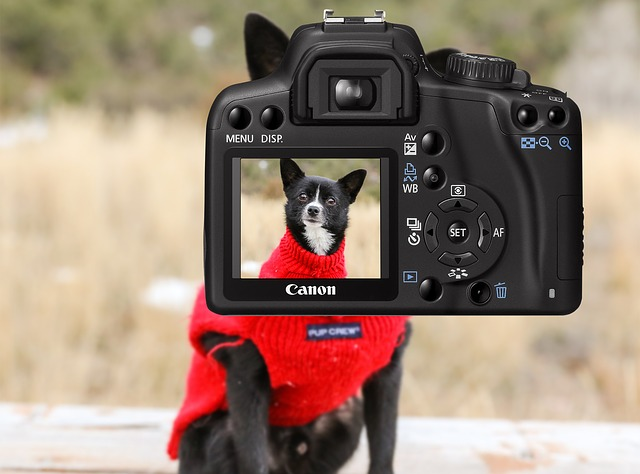 How To Get Your Pup To Pose For Holiday Photos