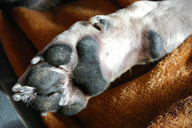 Frito-smelling dog paws