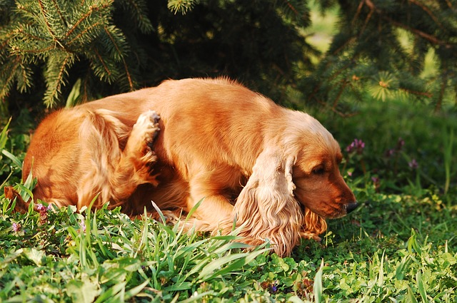 Could Your Dog Be Suffering From A Yeast Infection?