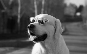 The Fact About Shade Blindness In Canines